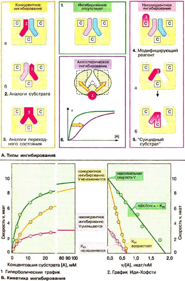 Ингибитор Дигидрофолат Редуктазы
